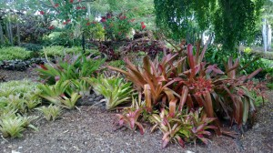 Landscaping in Brisbane